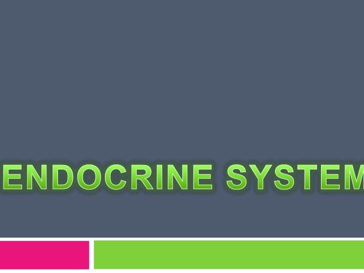 ENDOCRINE SYSTEM<br />