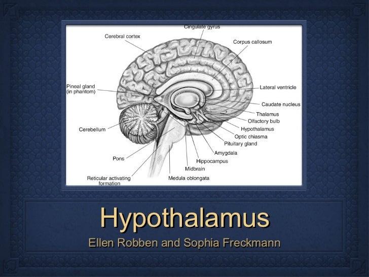 Hypothalamus: Sophia & Ellen