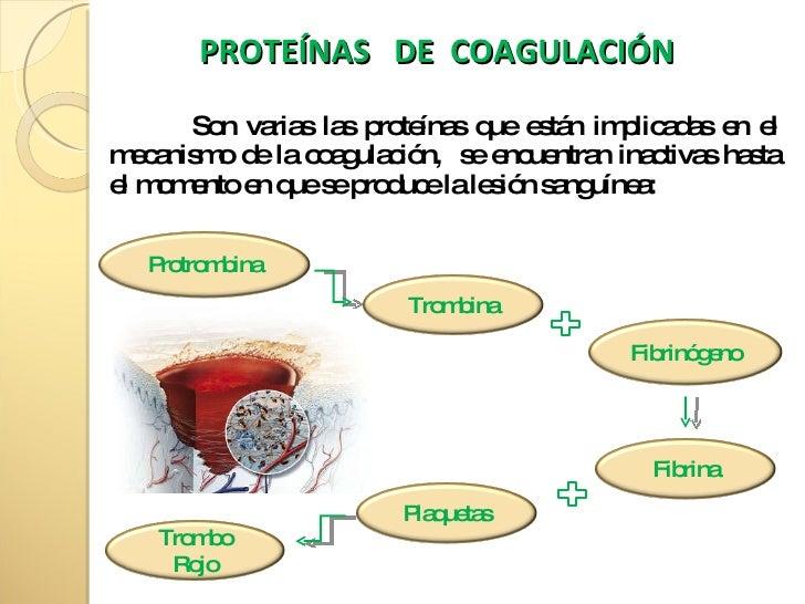 Los síntomas de las lombrices a las gallinas
