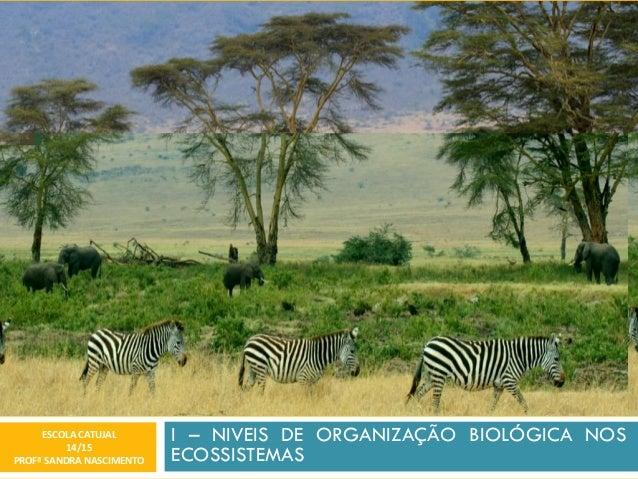I – NIVEIS DE ORGANIZAÇÃO BIOLÓGICA NOS ECOSSISTEMAS ESCOLA CATUJAL 14/15 PROFª SANDRA NASCIMENTO