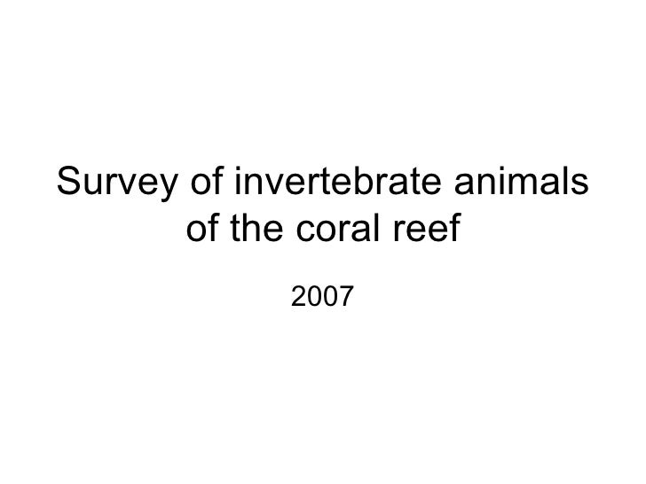 Survey of invertebrate animals of the coral reef 2007