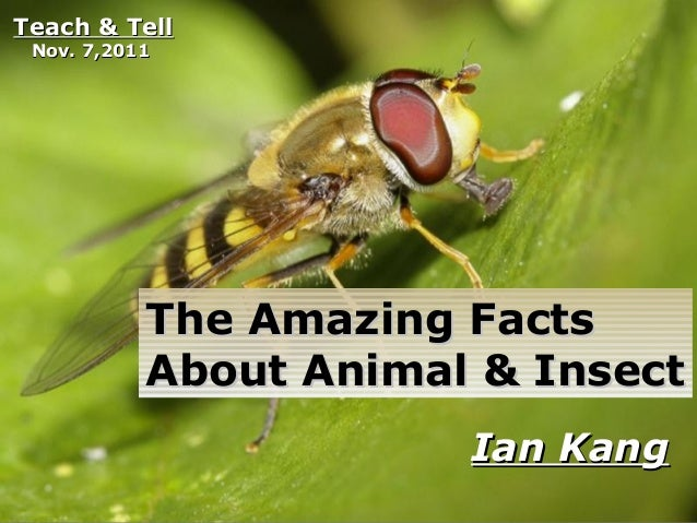 Free Powerpoint Templates Page 1 Free Powerpoint Templates The Amazing FactsThe Amazing Facts About Animal & InsectAbout A...