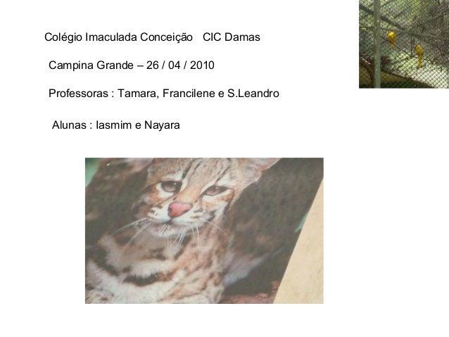 Colégio Imaculada Conceição CIC Damas Campina Grande – 26 / 04 / 2010 Professoras : Tamara, Francilene e S.Leandro Alunas ...