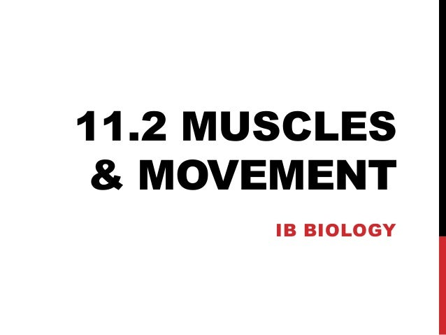 CAS Biology 11.2 Muscles and Movement
