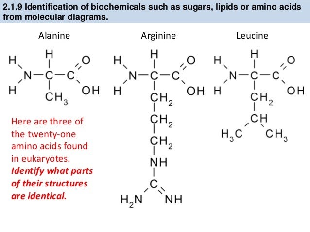Can someone tell me what these biology (molecule?) terms mean? (only two.)?