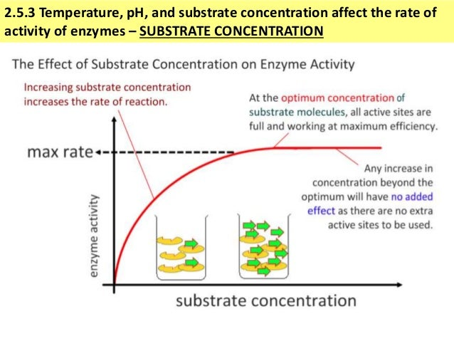 effects of a substrate concentration on invertase activity Determination of the effect of ph on invertase activity is the  temperature effects enzyme activity by decreasing  substrate concentration testing.