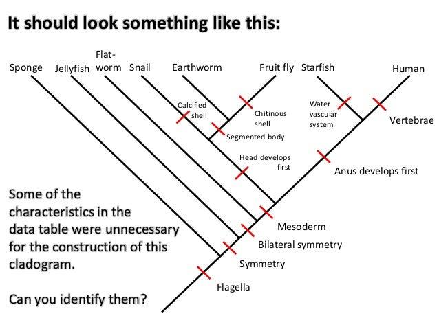 Cladogram worksheet answers venn diagram