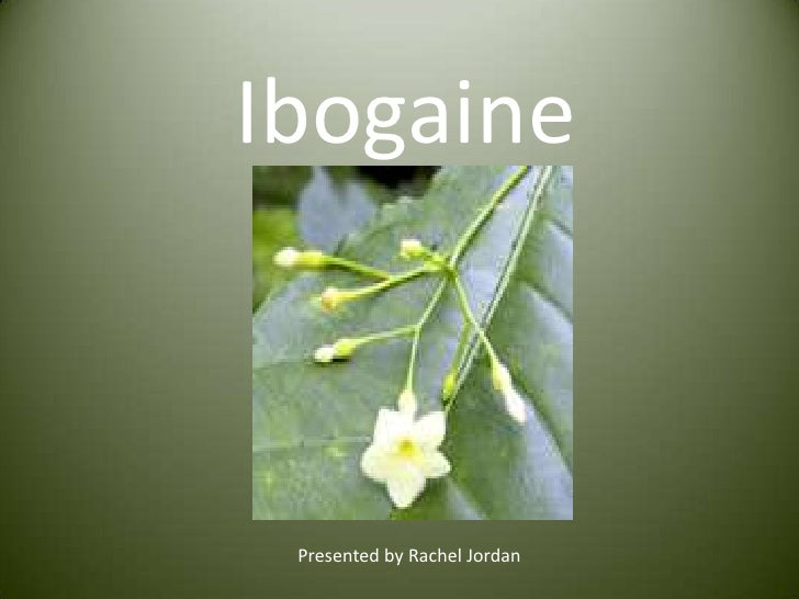 Ibogaine<br />Presented by Rachel Jordan<br />