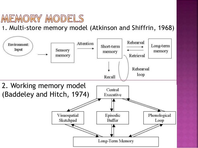 the multi store model and the reconstructive model psychology essay 26052013  i'm revising for my gcse psychology exam and i'm making a powerpoint of all the studies, definitions of words, evaluations, practical applications/implications etc to help me out with the revision.