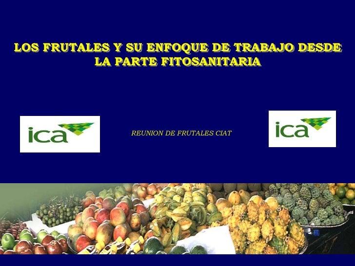 Ica   frutales  ciat- 2011