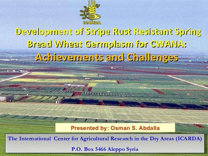 Development of Stripe Rust Resistant Spring Bread Wheat Germplasm for CWANA: Achievements and Challenges The Internation...