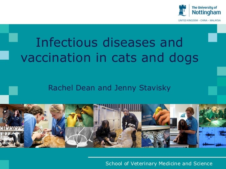 Infectious diseases and vaccination in cats and dogs Rachel Dean and Jenny Stavisky