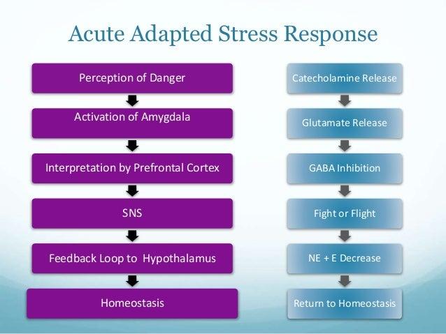 the acute stress response