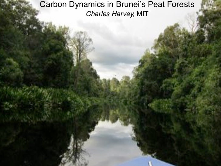 Carbon Dynamics in Brunei's Peat Forests           Charles Harvey, MIT