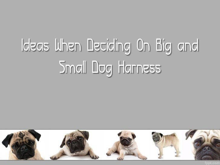Ideas When Deciding On Big and Small Dog Harness