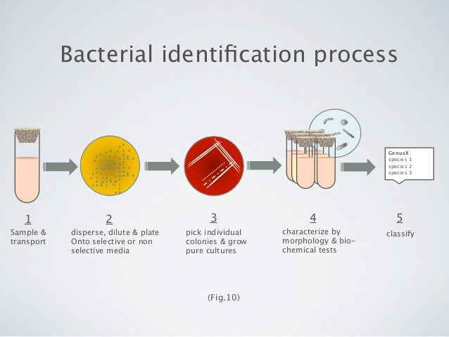 techniques for identifying an unknown bacteria Microbial metabolic processes are complex, but can be very helpful in identifying bacteria some bacteria ferment simple carbohydrates and produce acid or.