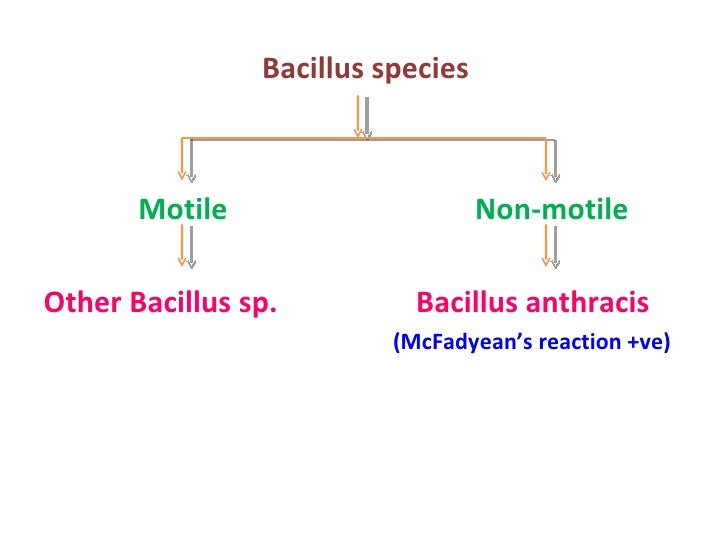 lab unknown for bacillus subtilis Identification of other unknown bacterial  bacillus subtilis positive rod  your lab instructor will let you know whether you are on a correct.