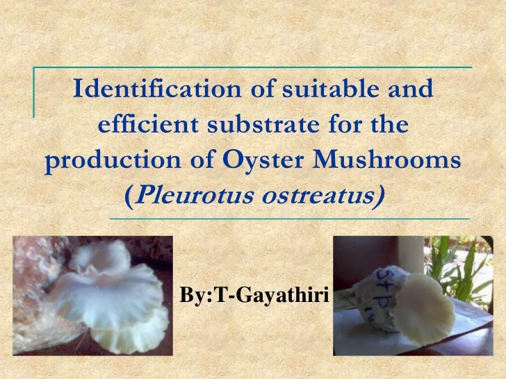 Identification of suitable and    efficient substrate for theproduction of Oyster Mushrooms      (Pleurotus ostreatus)    ...