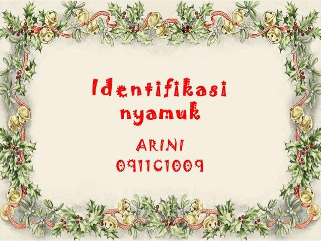 Identifikasi  nyamuk    ARINI  0911C1009