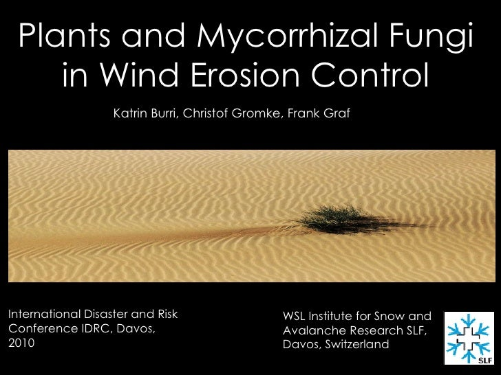 Plants and Mycorrhizal Fungi  in Wind Erosion Control   Katrin Burri, Christof Gromke, Frank Graf   WSL Institute for Snow...