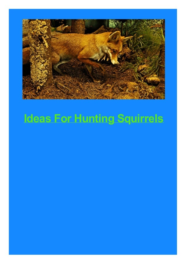 Ideas For Hunting Squirrels