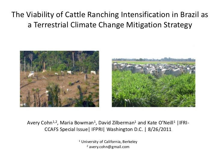 The Viability of Catle Ranching Intensification in Brazil as a Terrestrial Climate Change Mitigation Strategy