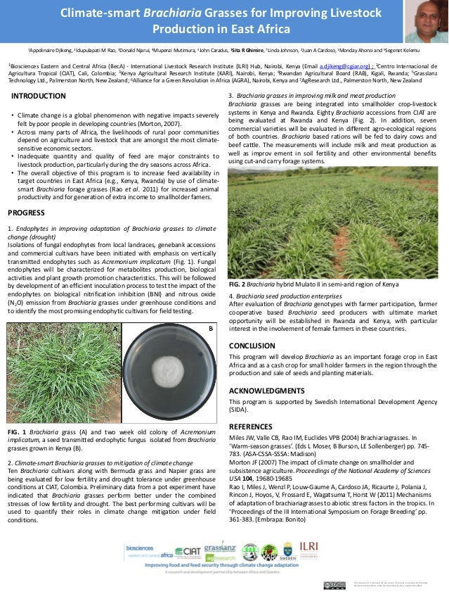 Climate-smart Brachiaria Grasses for Improving Livestock Production in East Africa