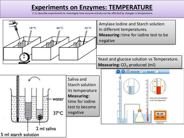 an investigation of enzyme activity through testing for changes in starch solution with the addition This can be used to guide students through the process once the investigation has it is always best to check the enzyme activity in powder solution test.