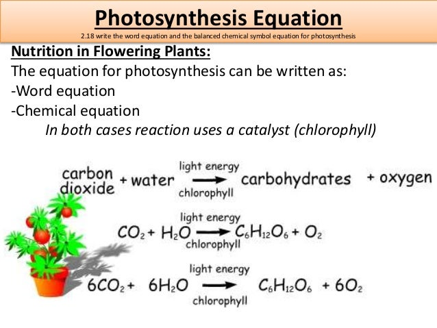 Word equation for photsynthesis
