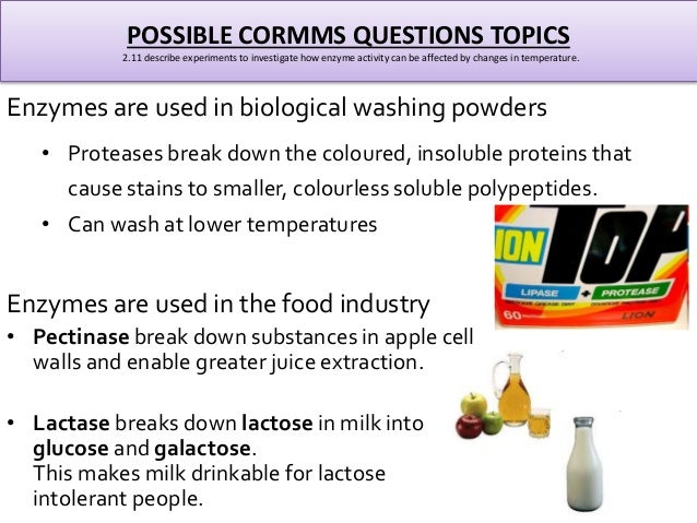 biology enzymes g c s e