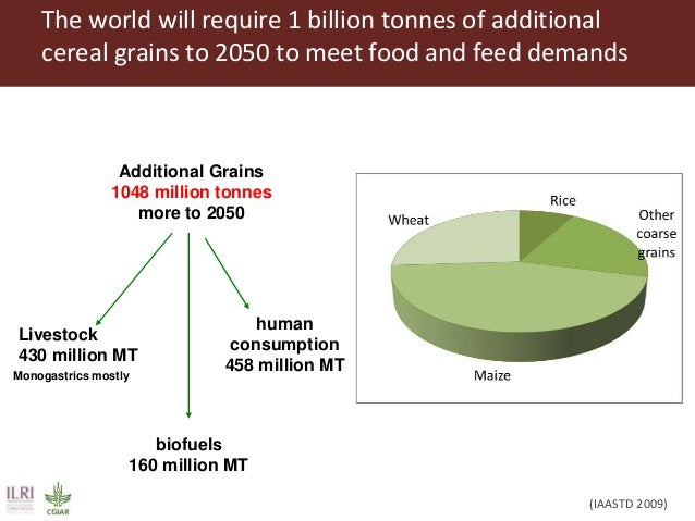 feeding the world in 2050 Free essay: feeding the world in 2050 the current world population is approximately 7 billion and it is estimated to increase to around 9 billion by the year.