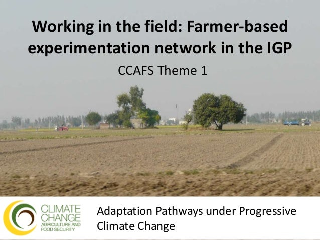 Working in the field: Farmer-based experimentation network in the IGP CCAFS Theme 1 Adaptation Pathways under Progressive ...