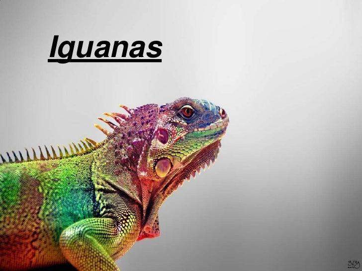 Iguanas<br />