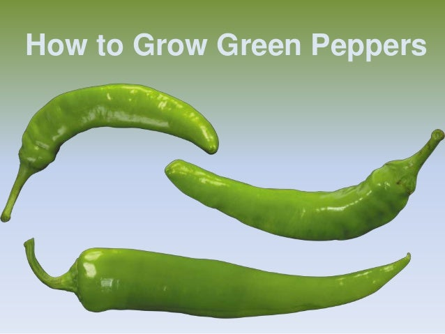 How To Grow Green Pepper
