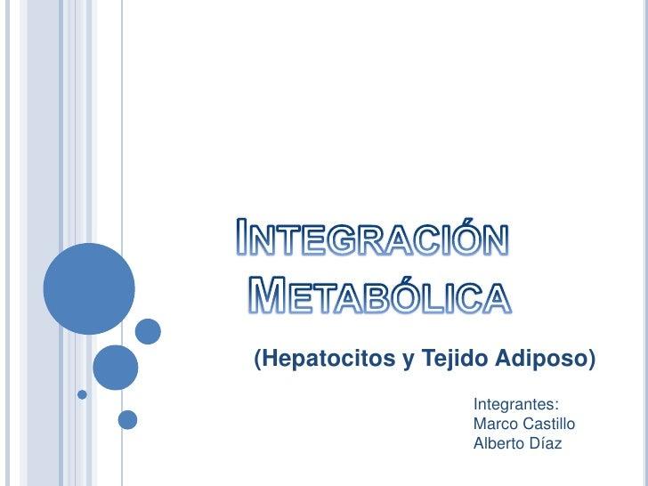 Integracón Metabólica, Hepátocitos y Tejido Adiposo.