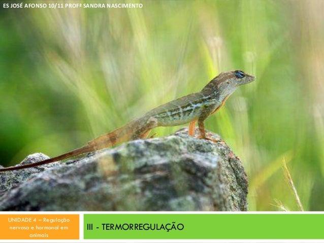 III - TERMORREGULAÇÃO ES JOSÉ AFONSO 10/11 PROFª SANDRA NASCIMENTO UNIDADE 4 – Regulação nervosa e hormonal em animais