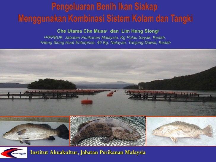 Che Utama Che Musaa dan Lim Heng Siongb          PPPBUK, Jabatan Perikanan Malaysia, Kg Pulau Sayak, Kedah,          a    ...