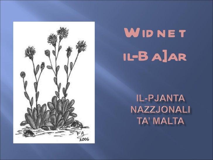 Il-Pjanta Nazzjonali ta' Malta