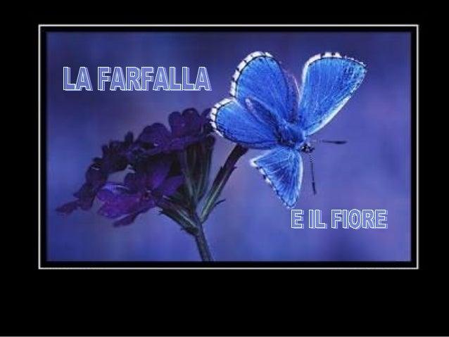 Una volta un uomo chiese a Dio un fiore...  ...e una farfalla.
