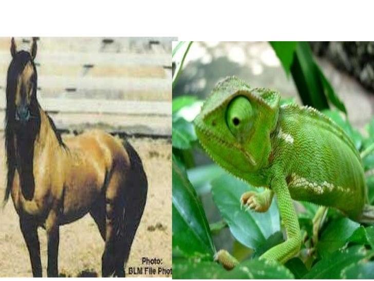 I love mustangs_and_chameleons_