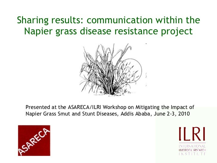 Sharing results: communication within the Napier grass disease resistance project Presented at the ASARECA/ILRI Workshop o...