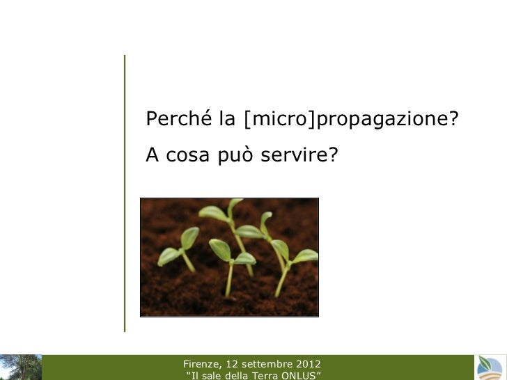 Vitro cooperation by Sara Di Lonardo ( IBIMET-CNR)