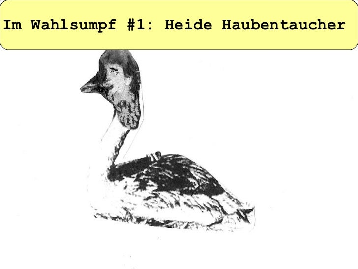 Im Wahlsumpf #1: Heide Haubentaucher