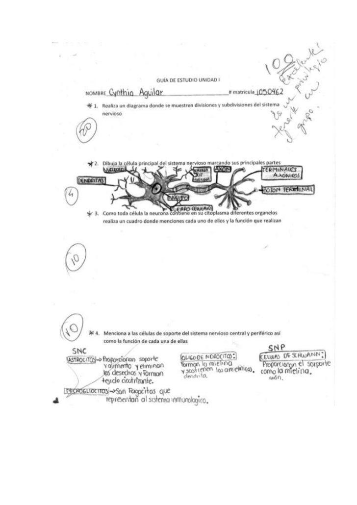 Guia de estudio Neurofisiologia