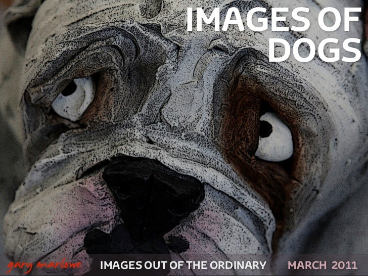 IMAGES OF                                    DOGS!    gary marlowe   IMAGES OUT OF THE ORDINARY SEPTEMBER 2011