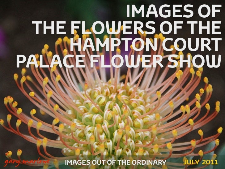 IMAGES OF       THE FLOWERS OF THE           HAMPTON COURT      PALACE FLOWER SHOW!    gary marlowe   IMAGES OUT OF THE OR...