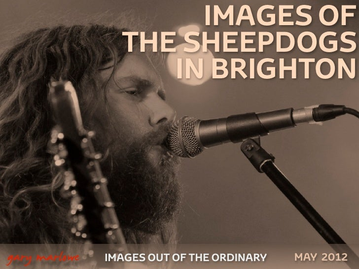 IMAGES OF                     THE SHEEPDOGS                        IN BRIGHTON    gary marlowe   IMAGES OUT OF THE ORDINA...