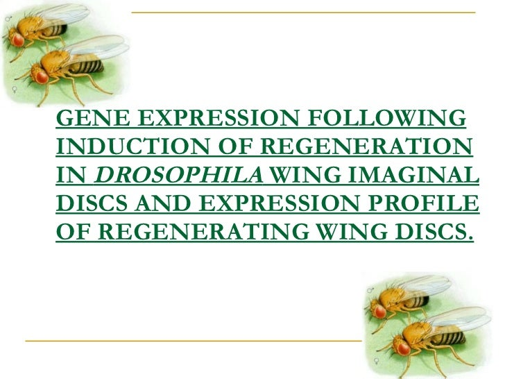 GENE EXPRESSION FOLLOWING INDUCTION OF REGENERATION IN  DROSOPHILA  WING IMAGINAL DISCS AND EXPRESSION PROFILE OF REGENERA...