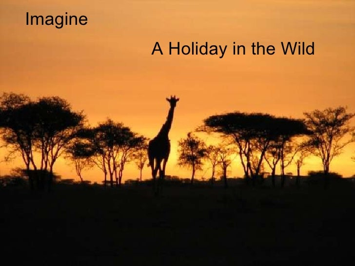A Holiday in the Wild Imagine