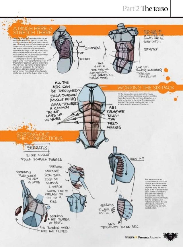 imaginefx anatomy vol 2 pdf